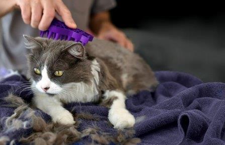 La caída del pelo en los gatos
