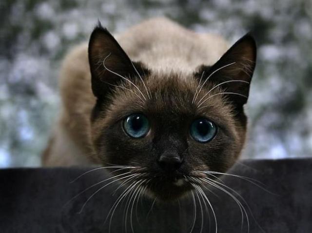 trucos para saber qué piensa tu gato