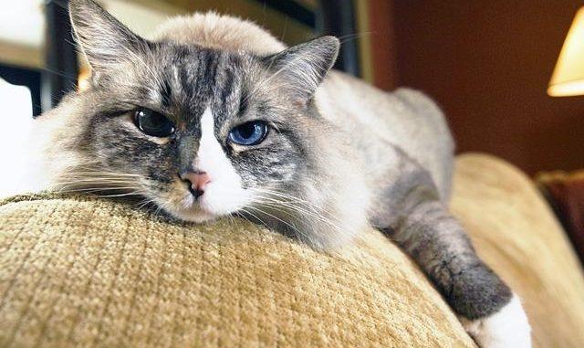 gato comunicacion gestos interpretacion lenguaje felino gato 2