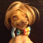Un perro abandonado es viral en las redes sociales