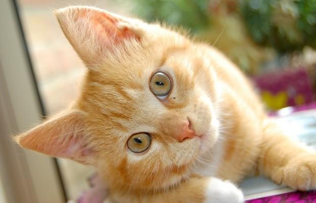 Curiosos datos que no sabías sobre los gatos