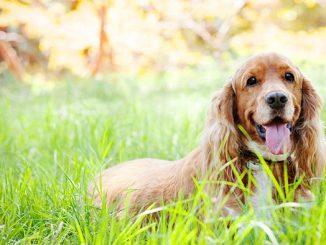 Cinco recomendaciones para fotografiar a tu mascota
