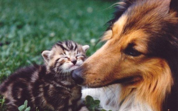 Fotos de amistades animales curiosas