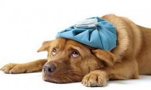 Qué cosas debemos hacer con nuestra mascota para fortalecer su estado de salud