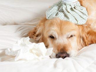 Seguros para Mascotas datos qué necesitas saber