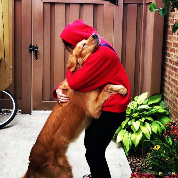 Qué buen tipo  Compró un perro que había sido robado para devolvérselo a los dueños
