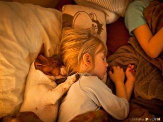 20 fotos tiernas de perros abrazando a sus dueños