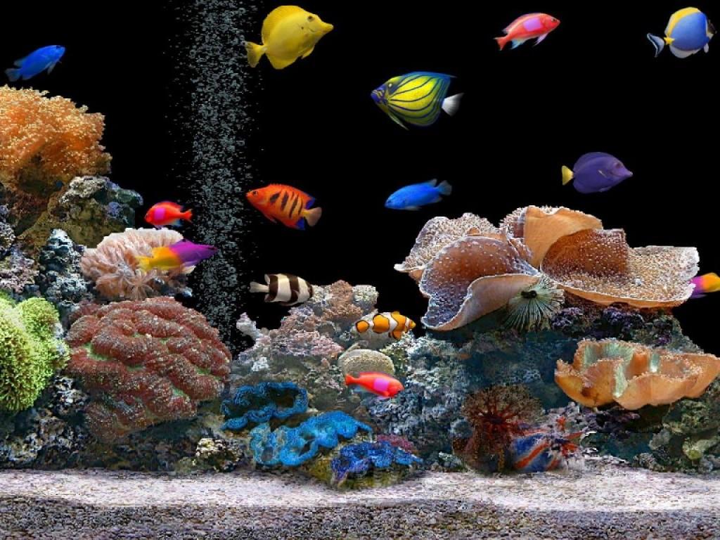 Cómo poner en marcha y mantener un acuario hogareño