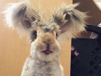 Wally: el conejo con las orejas más tiernas