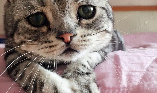 El Gato más triste del mundo