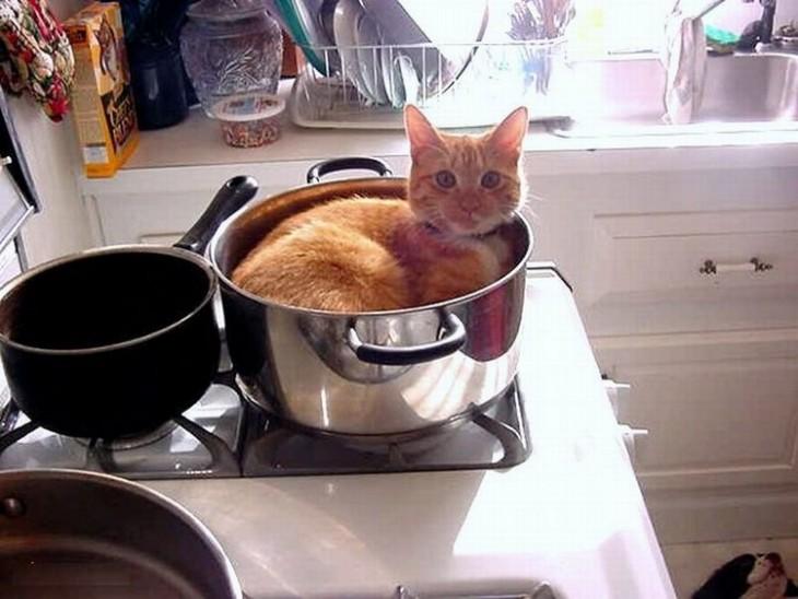 20 gatos que ponen a prueba la lógica de los humanos