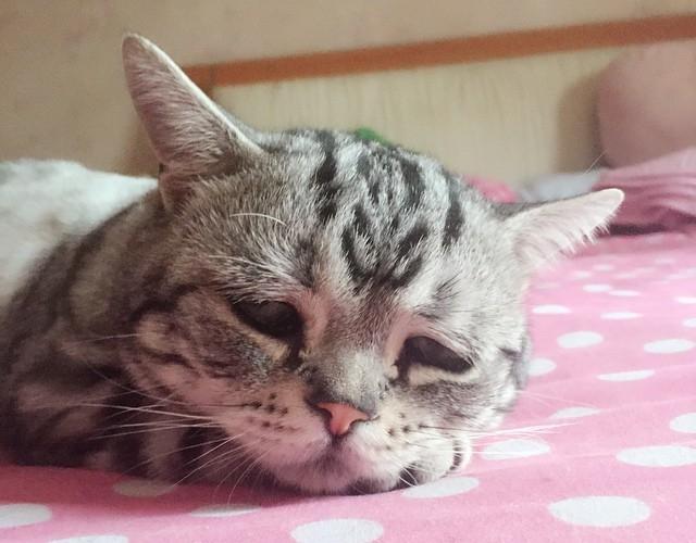 Conoce a la gatita más deprimente de Instagram