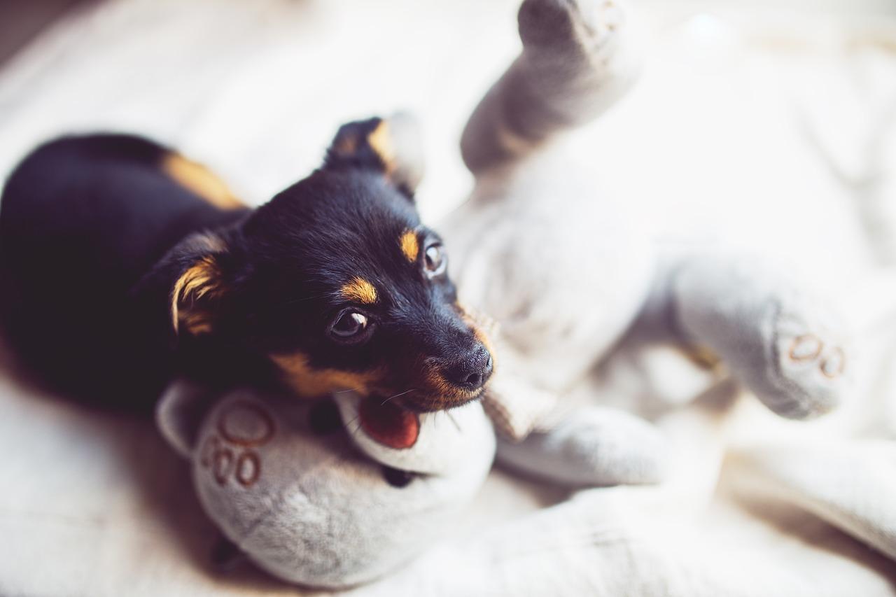 Aprende a cuidar a tu primera mascota