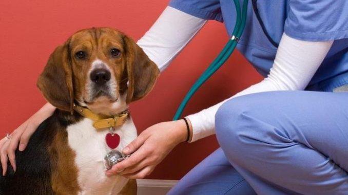 Cómo saber si tu perro presenta problemas cardíacos