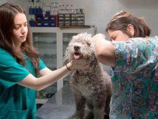 consejos para proteger a tu cachorro del parvovirus