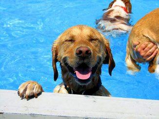 Consejos para cuidar un perro en verano