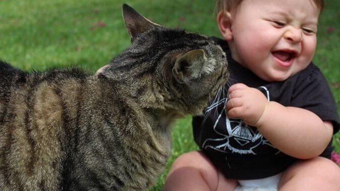 Alimentar el vínculo entre un gato y un bebé