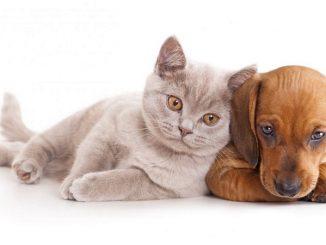 Cuándo castrar o esterilizar a tu mascota