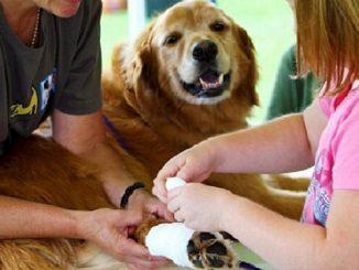 Primeros auxilios para mascotas
