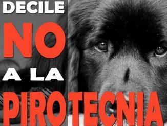 Por amor a los animales... NO A LA PIROTECNIA