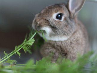 Cómo Alimentar un Conejo Bebe