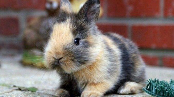 Qu pueden comer los conejos enanos - Casas para conejos enanos ...