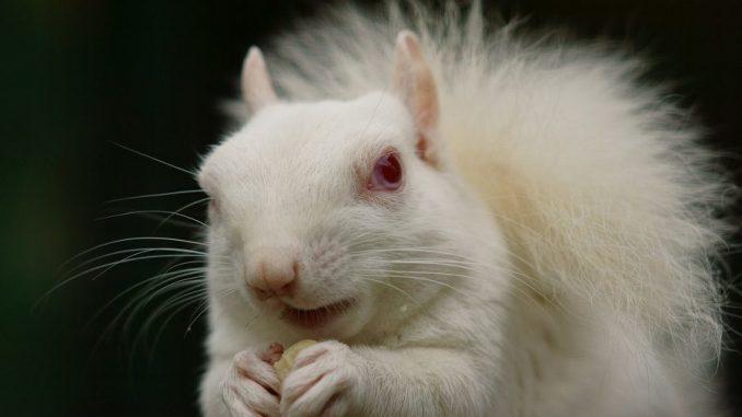 Informaci n sobre los animales albinos for Informacion sobre los arquitectos