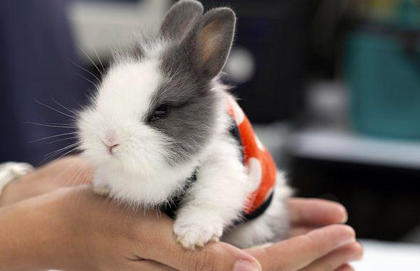 Lista de Nombres para Conejos