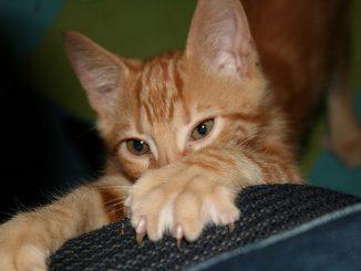 Porque los Gatos Arañan la Madera