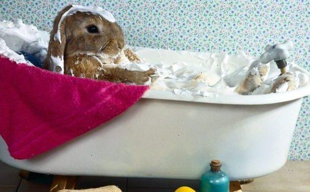 Cómo Debo Bañar a mi Conejo