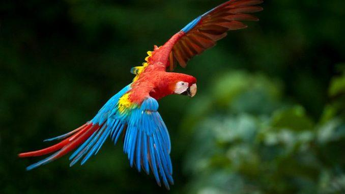 A que se debe la caída de las plumas en las aves