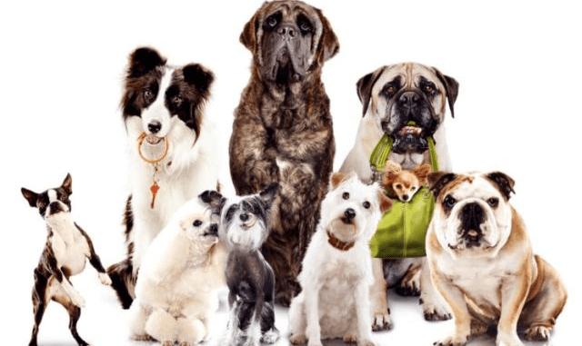 Proporciones y Estándares de los Perros
