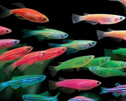 Caracter sticas de las especies de peces informaci n for Especies de peces