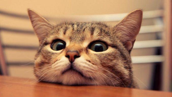 Las enfermedades más comunes en gatos