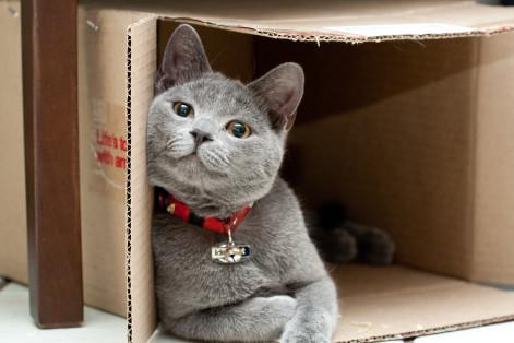 Los Mejores Juguetes Caseros para Gatos