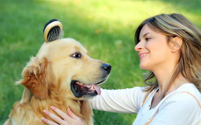 Remedios naturales para el cuidado de la piel del perro