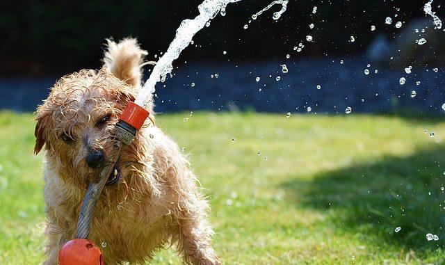 Cómo Cuidar a un Perro en la Temporada de Verano