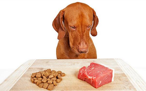 Los Riesgos de los Alimentos Crudos para Perros y Gatos
